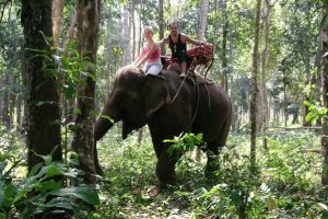 The Best Wildlife Experiences To Enjoy When Visiting Thailand