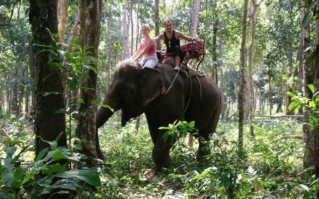 Elephant Encounters