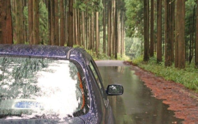 Driving through deep forest in Rokuroshi, Katsuyama city