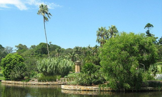 Pond in the Royal Botanic Gardens, Sydney, Australia